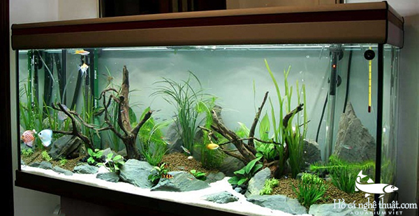 Phong thủy lúc  đặt bể cá cảnh trong nhà - 172044