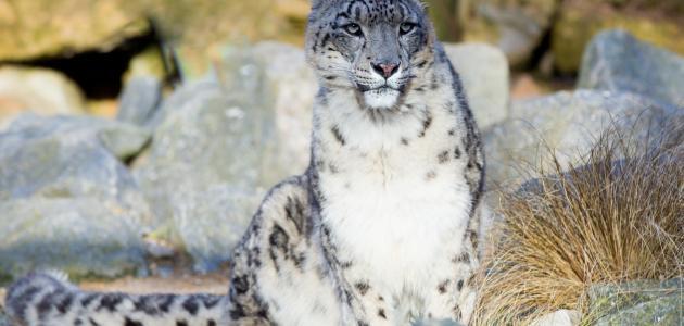 طرق حول حماية الحيوانات  مهددة بالإنقراض