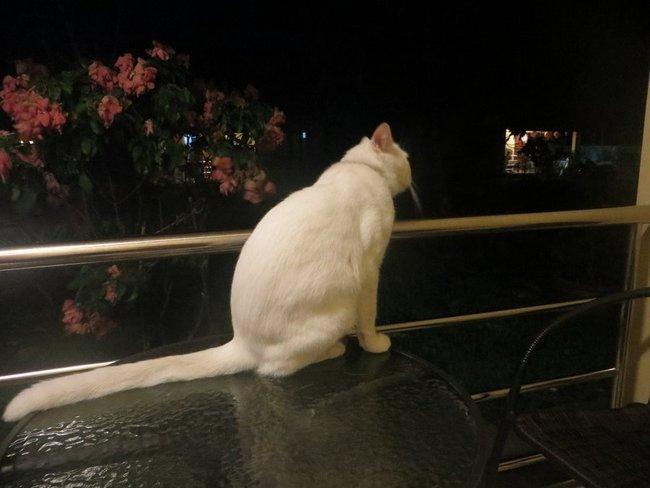 Большой кот сидит на столе