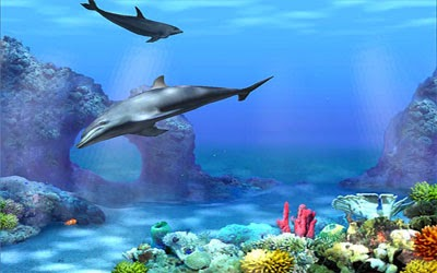 Living 3d Dolphin Animated Wallpaper خلفيات متحركة 2014 خلفيات خلفيات اسلاميه خلفيات حلوه