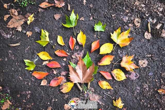Autumn leaves in Japan Park Tree Flower Garden