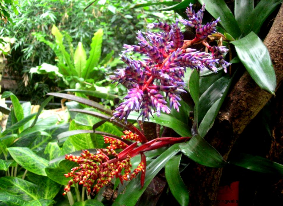 Tropical Rainforest Plants And Their Names | Amazing ...