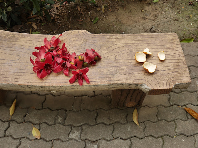 tangerine pee with more red silk-cotton (Bombax ceiba, kapot) flowers on a park bench