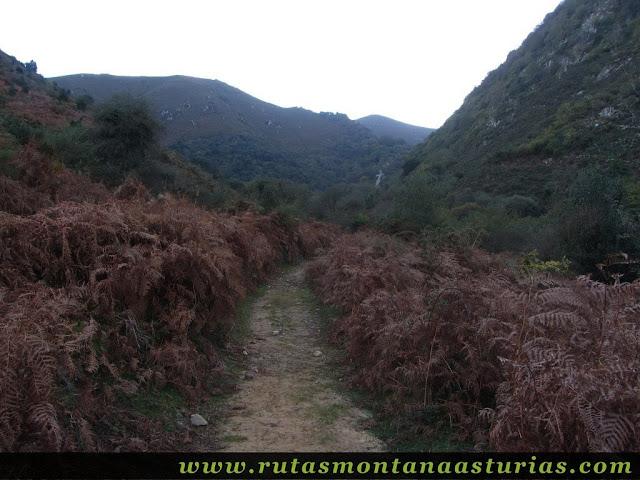 Ruta Pienzu por Mirador Fito y Biescona: Vista hacia el hayedo