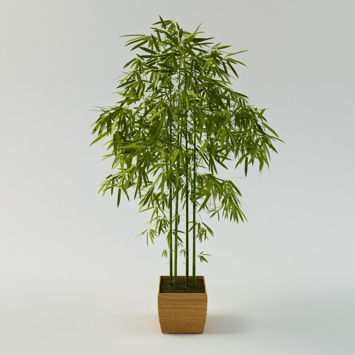 3d models for professionals: Bamboo palm 3d model