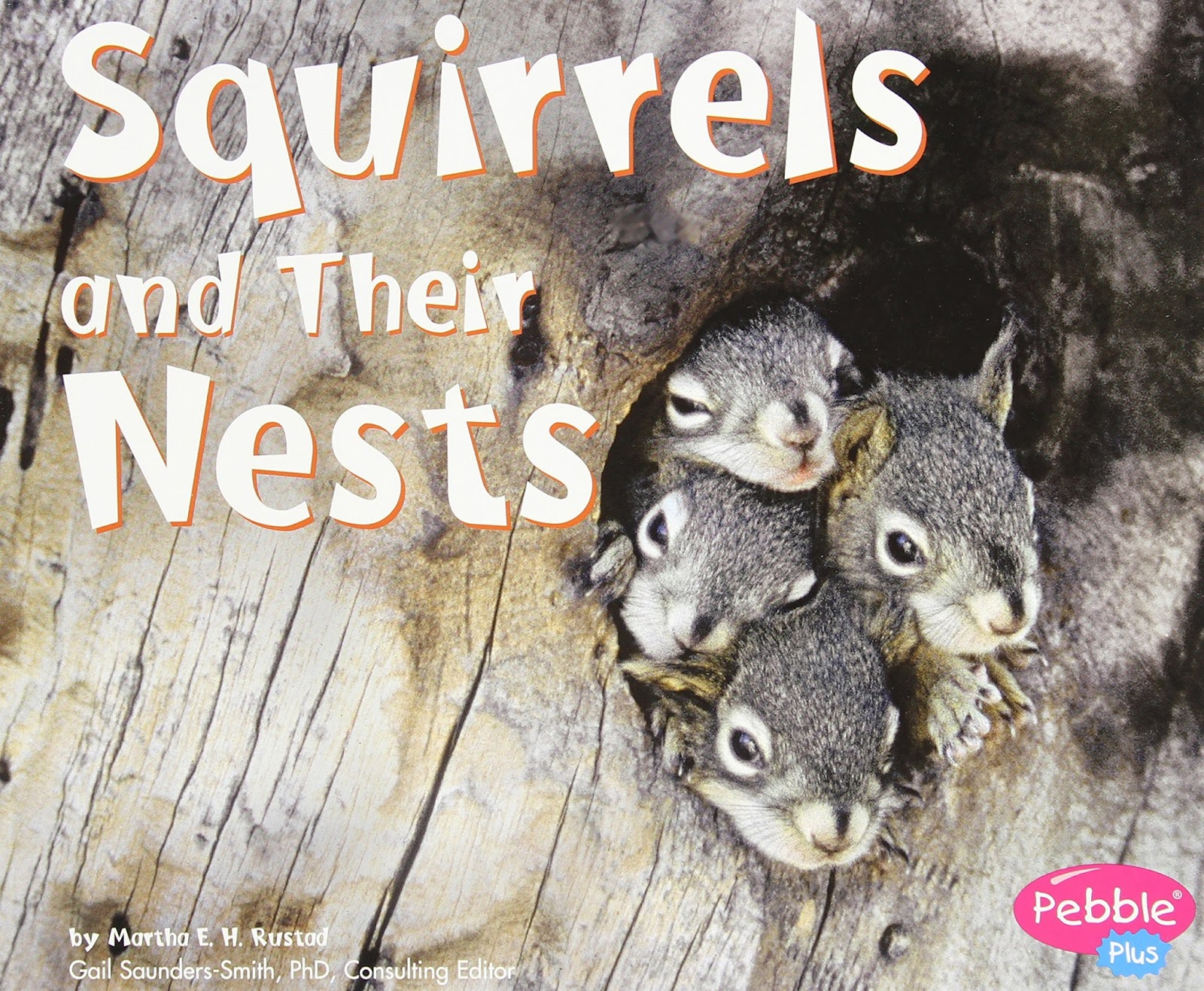 Interested in learning more about these cute woodland animals with your  little one? These books are here to help introduce squirrels in both a fun  and ...