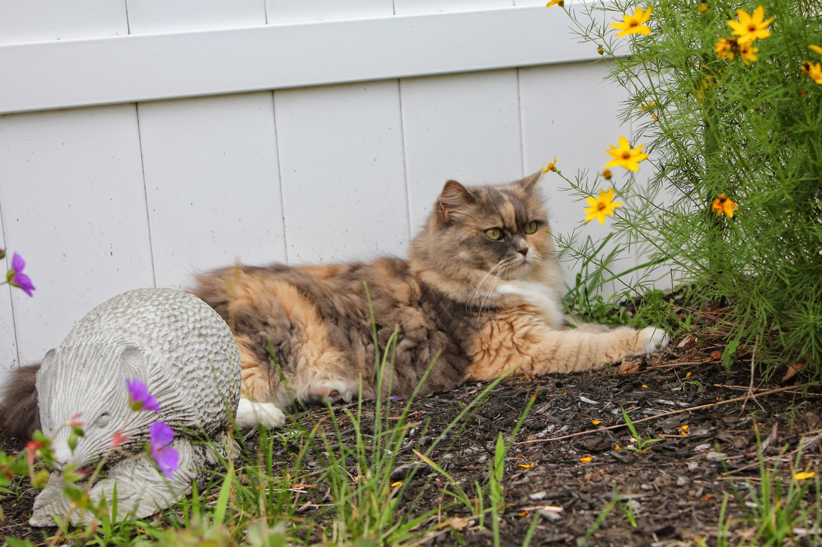 cat lying in garden waiting for birds