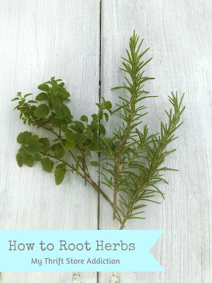 How to root herbs plus DIY bouquet garni