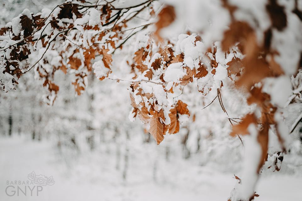 zimowy las, kozłowiecki park krajobrazowy, zima w lesie, sesja w lesie, dąb,