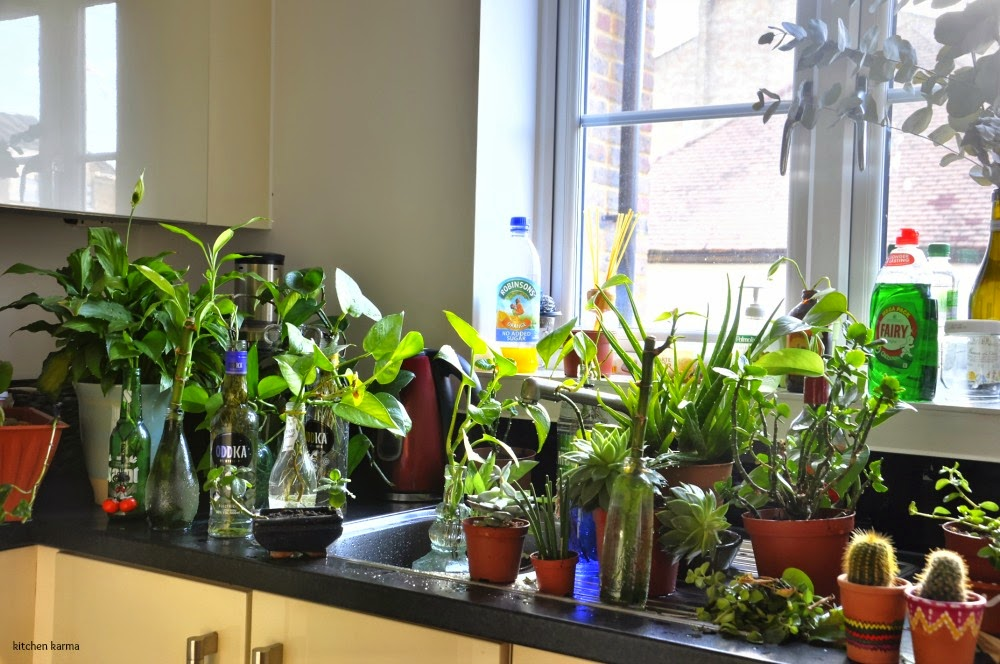 Kitchen Karma: How Not To Kill Your House Plants