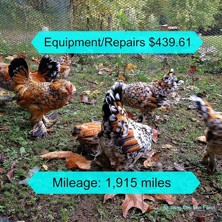 The true cost of raising a LOT of chickens