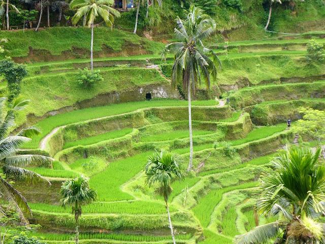 vackraste risfält på Bali