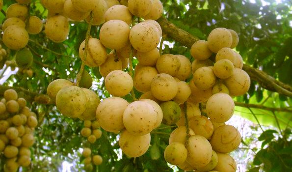 Image result for duku site:blogspot.com