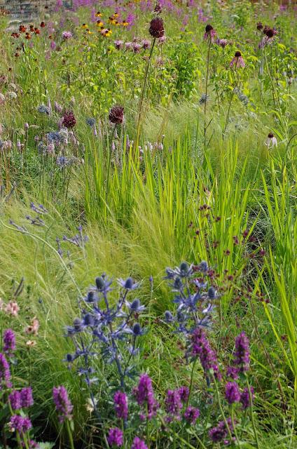 trawy-byliny-blog-ogrodniczy