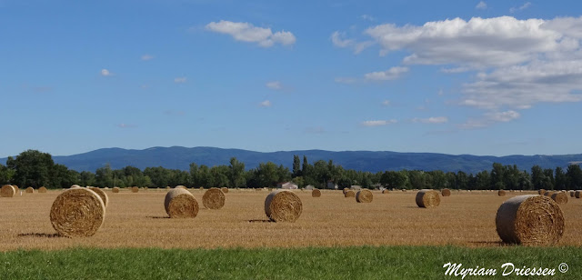 moissons dans la plaine de Castres crop harvesting South of France