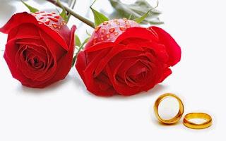 Gambar Bunga Mawar Merah Yang Cantik_Red Roses Flower 2005