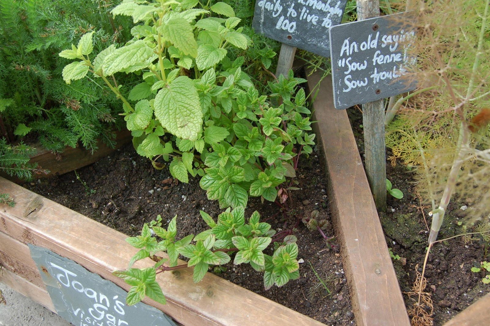 Museum of Witchcraft Diary: Mystery herbs appear outside the Museum
