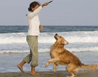 actividades fisicas del perro