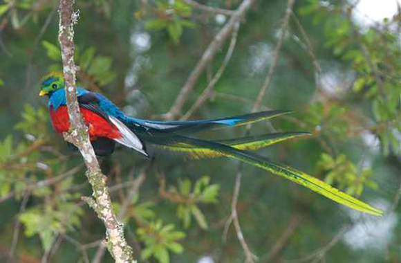 طيور نــادرة رائــــــعة 01-f560-quetzal1.jpg