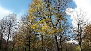 Arbres du jardin du Ranelagh le 16 onzème 2016