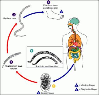 http://www.pusatmedik.org/2016/06/definisi-penyebab-dan-pengobatan-penyakit-ankilostomiasis-serta-askariasis-menurut-ilmu-kedokteran.html