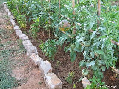 Απόσταση φύτευσης λαχανικών