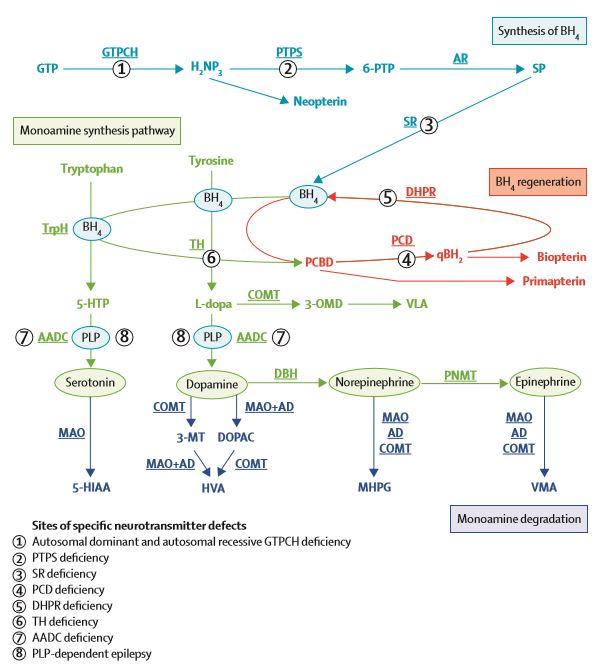 hva er serotonin