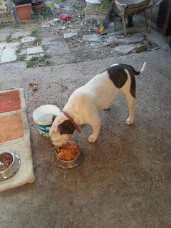 Associazione amici del cane di latina - Diva futura roberta ...