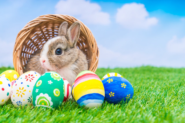 Easter-bunny-image