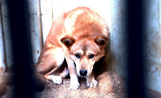 Egypt to export live dogs to Korea