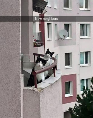 Funny new neighbours cat snapchat joke picture