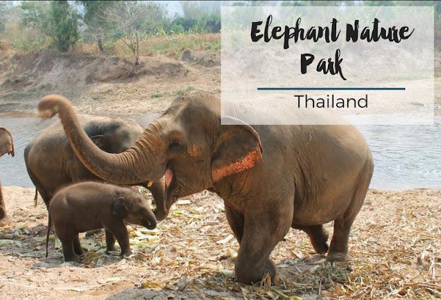 Elephant Nature Park // Thailand