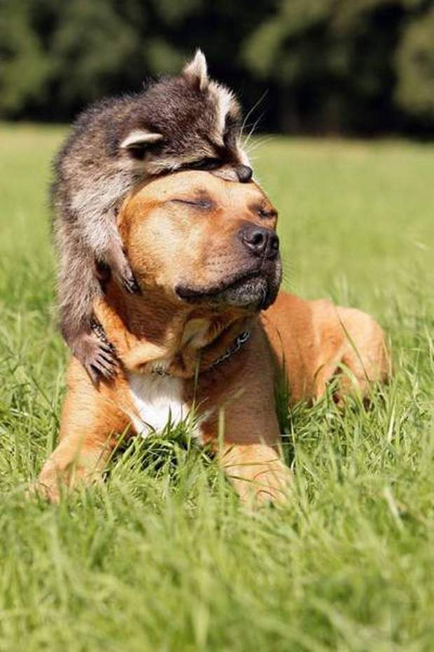 Funny animals of the week - 11 March 2016, best funny animal pictures, animal photo, cute animals