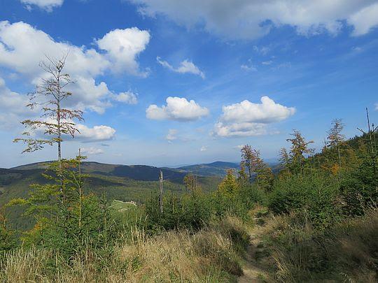 Górne partie Magurki i widoki na Pasmo Jałowieckie (Jałowiec widoczny po lewej za drzewem).