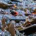 Cara Gampang dan Hemat Budidaya Ikan Air Tawar di Kolam Terpal