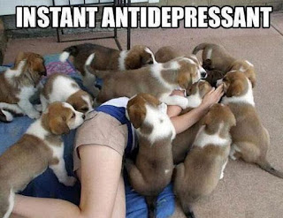 Fighting Depression Using Dogs