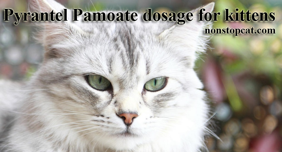 Pyrantel Pamoate dosage for kittens