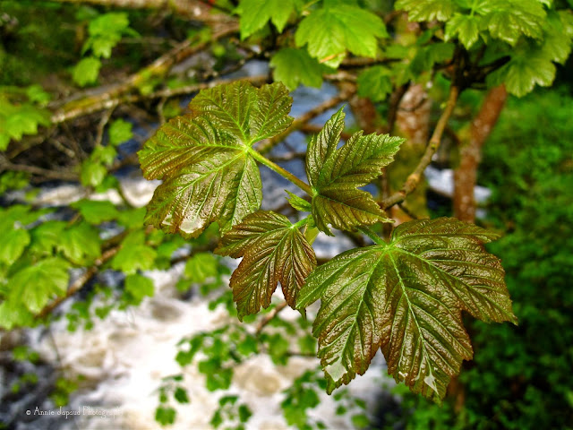 close up of some leaves with a river in the background
