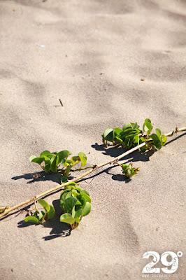 Surf - Playa Grande