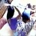 Vídeo: Pai esconde câmera e flagra esposa espancando filho