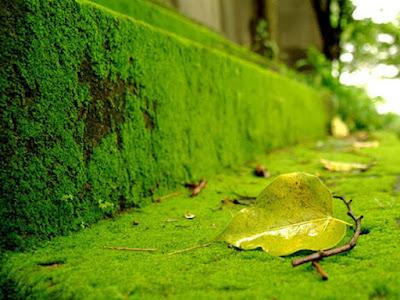 tự kỷ xanh rêu