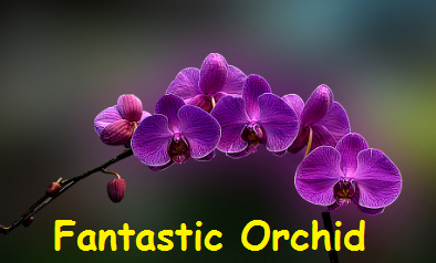 the Color Orchid Image