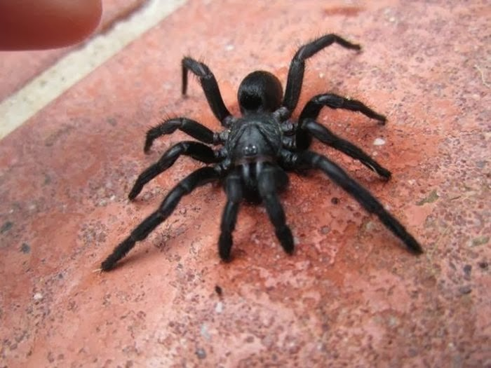 Spiders of Australia ~ Damn Cool Pictures