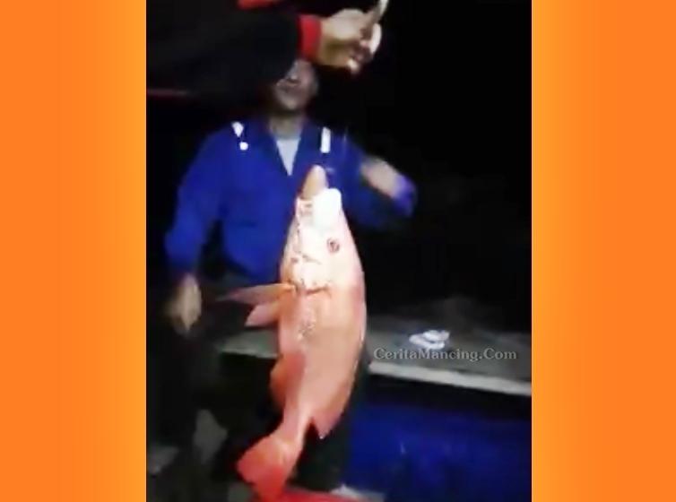 Mancing Handline Ikan Kakap Merah Dan Ikan Kaci