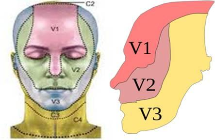 Picture of facial dermatomes