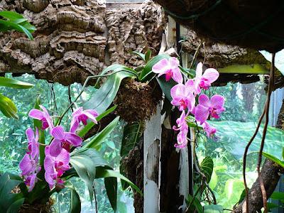 Orquídeas en el jardín La Mortella