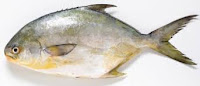 Gudang Ikan