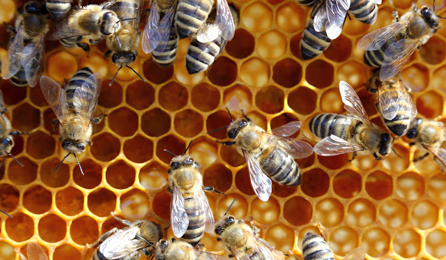 Μελισσοκόμος από την Αργολίδα καταδικάστηκε για τον θάνατο γυναίκας από τα μελίσσια του