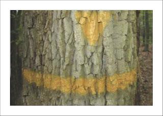 http://photonature-fontainebleau.blogspot.fr/2016/02/peintres-peintures-marques-peintes-en.html