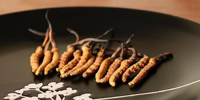 Đông trùng hạ thảo có tác dụng với bệnh lý đường hô hấp